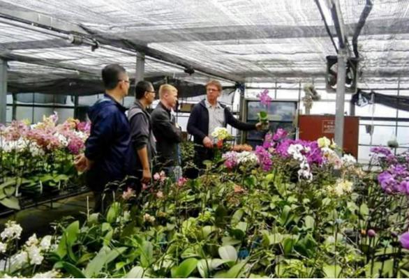 培育台灣蘭苗 拓展耕耘國際市場